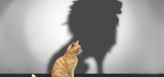 Orgoglio o pregiudizio? Il driver positivo per la tua autostima