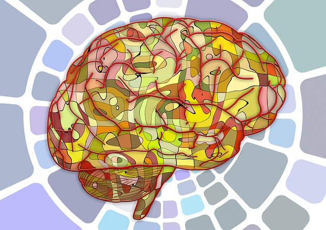 Identificato un metodo per individuare il codice del cervello che fa funzionare i 5 sensi