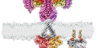 Virus killer, scoperta la molecola da disattivare per renderli innocui
