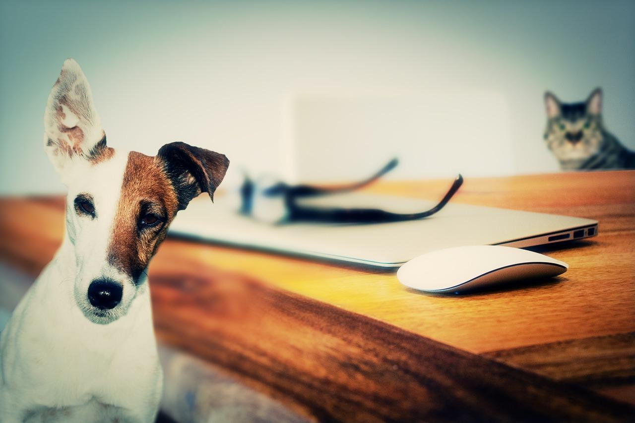Animali domestici, un toccasana per la salute degli uomini