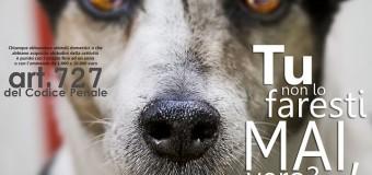 Estate: torna il crudele fenomeno dell'abbandono degli animali da compagnia