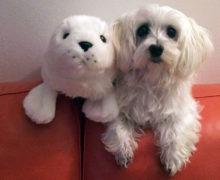 La storia di Pimpa e le terapie avanzate in medicina veterinaria